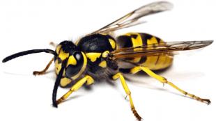 Arı İlaçlama