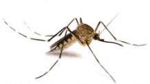 Sivri Sinek İlaçlama