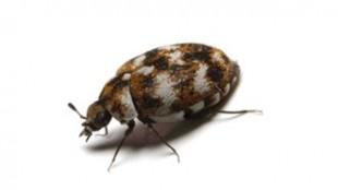 Tekstil Böceği İlaçlama